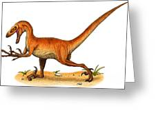 Velociraptor Greeting Card by Roger Hall and Photo Researchers