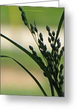 Verdant Grain Greeting Card by Sonali Gangane