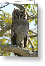 Verreauxs Eagle Owl, Bubo Lacteus, Or Greeting Card by Paul Sutherland