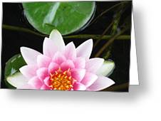 Vertical Water Lily Greeting Card by Debbie Finley