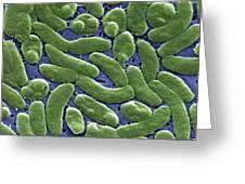 Vibrio Vulnificus Bacteria, Sem Greeting Card by Cdc