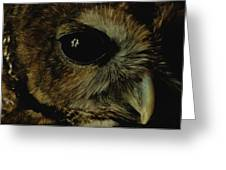 View Of A Northern Spotted Owl Strix Greeting Card by Joel Sartore