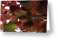 Vine Leaves Greeting Card by Douglas Barnard