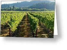Vineyard At Harvest Greeting Card by Kathleen Fitzpatrick