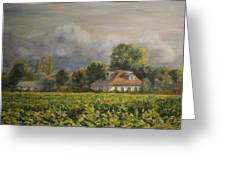 Vineyard Fog Santa Rosa Greeting Card by Edward White