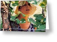 Vineyard Harvest Greeting Card by Padre Art