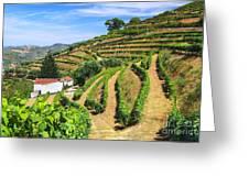 Vineyard Landscape Greeting Card by Carlos Caetano