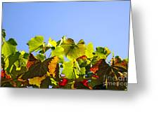 Vineyard Leaves Greeting Card by Carlos Caetano