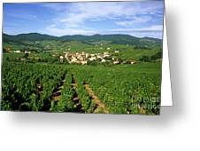 Vineyard Of Beaujolais In France Greeting Card by Bernard Jaubert