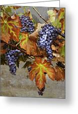 Vineyard Splendor Greeting Card by Sharon Foster