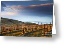 Vineyard Storm Greeting Card by Mike  Dawson