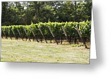 Vineyards Greeting Card by Leslie Leda