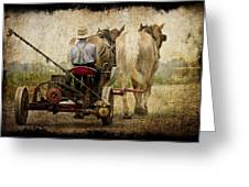 Vintage Amish Life D0064 Greeting Card by Wes and Dotty Weber