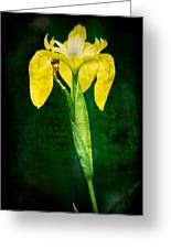 Vintage Canna Lily Greeting Card by Rich Leighton