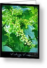 Vintage Vines  Greeting Card by Carol Groenen