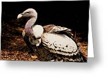 Vulture Greeting Card by Paulette Thomas