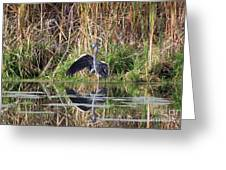 Wading In Heron Greeting Card by Cathy  Beharriell