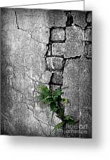 Wall Ferns Greeting Card by Perry Webster