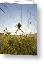 Wasp Spider Argiope Bruennichi In Web Greeting Card by Konrad Wothe
