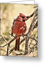 Watch Me Greeting Card by Mike OBrien