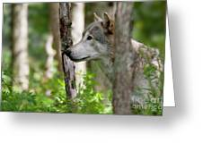 Watcher In The Woods Greeting Card by Michael Cummings