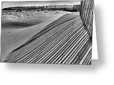 Watching Shadows Bw Greeting Card by JC Findley