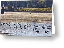 Water Fowl At Lake Wilhelmina Arkansas Greeting Card by Douglas Barnard