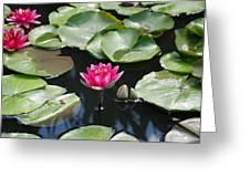 Water Lilies Greeting Card by Jennifer Ancker