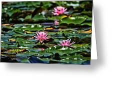 Water Lilies Greeting Card by Karol  Livote