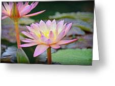 Water Lilies Greeting Card by Steven  Michael