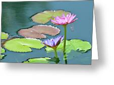 Water Lillies Of A Different Color Greeting Card by Kathy Gibbons
