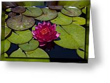 Water Lilly 4 Greeting Card by Charles Warren