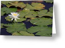 Water Lilly Greeting Card by Forest Alan Lee