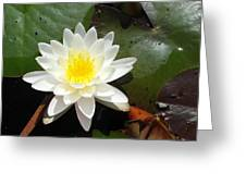 Water Lily 1 Greeting Card by Tanya Moody