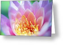 Water Lily Center Greeting Card by Kicka Witte