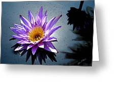 Water Lily Dream At Fairchild 2 Greeting Card by Olivia Novak