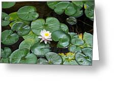 Water Lily Greeting Card by Kay Sawyer