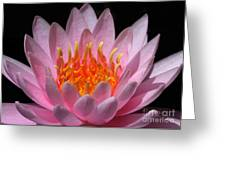 Water Lily On Fire Greeting Card by Sabrina L Ryan