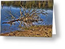 Waterlogged Tree Greeting Card by Douglas Barnard