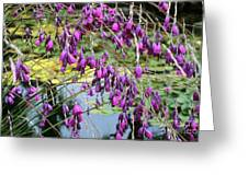 Wedding Bells (dierama Pulcherrimum) Greeting Card by Adrian Thomas