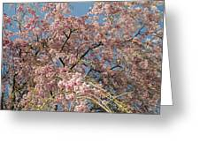 Weeping Cherry Tree In Bloom Greeting Card by Todd Gipstein