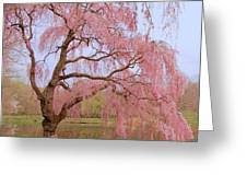 Weeping Spring- Holmdel Park Greeting Card by Angie Tirado