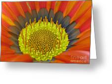 Well-disposed Greeting Card by Tina Marie