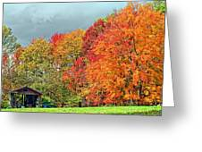 West Virginia Maples 2 Greeting Card by Steve Harrington