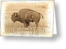 Western Buffalo Greeting Card by Steve McKinzie