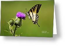 Western Tiger Swallowtail - Milkweed Thistle 2564 Greeting Card by James Ahn