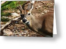 What Are You Looking At Greeting Card by Ricky Barnard