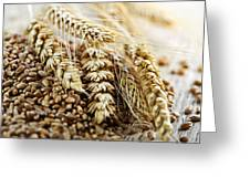 Wheat Ears And Grain Greeting Card by Elena Elisseeva