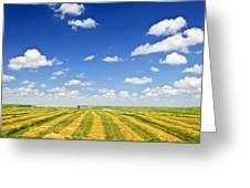 Wheat Farm Field At Harvest Greeting Card by Elena Elisseeva
