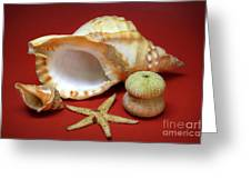 Whelks Greeting Card by Carlos Caetano